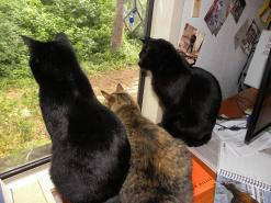 cats watching bunny