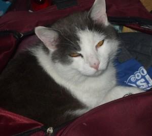 Julie's cat
