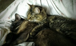 sammy and lily when I was sick