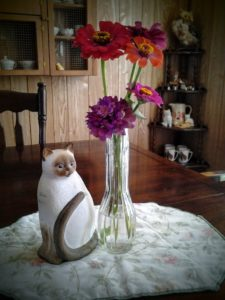 cat and flowers 6-16