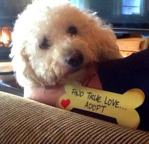 find-true-love-adopt