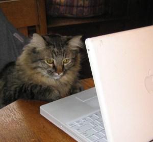 Frank blogging