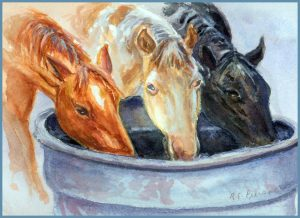 Portrait of three horses drinking from a metal trough, by Robert Pierson, DVM