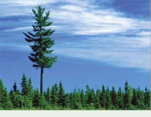 tall_short_trees