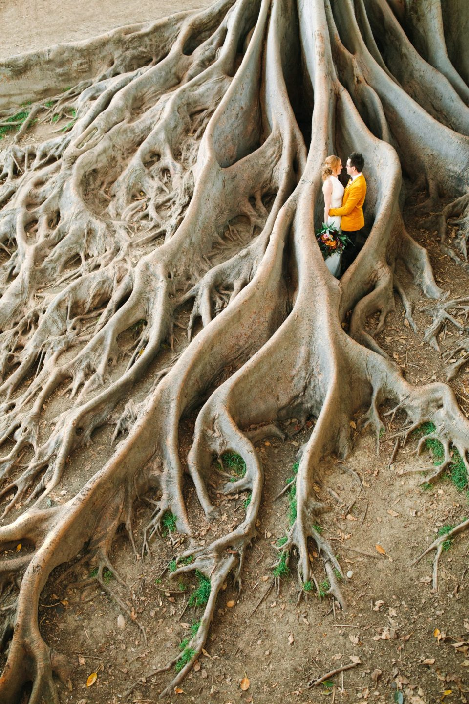 Fig tree root portrait - www.marycostaweddings.com