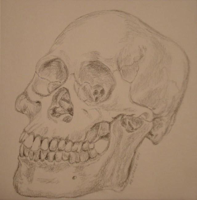 Bone study (skull), pencil, Mary Warner, December 2014.