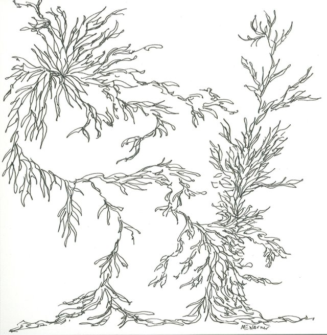 Leaves, Micron pen, by Mary Warner, 2014.