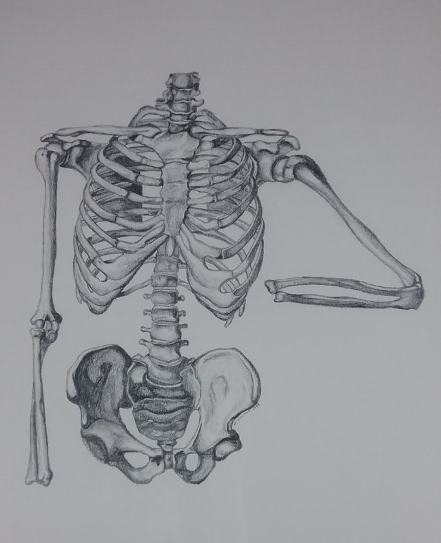The Aerobic Skeleton by Mary Warner.