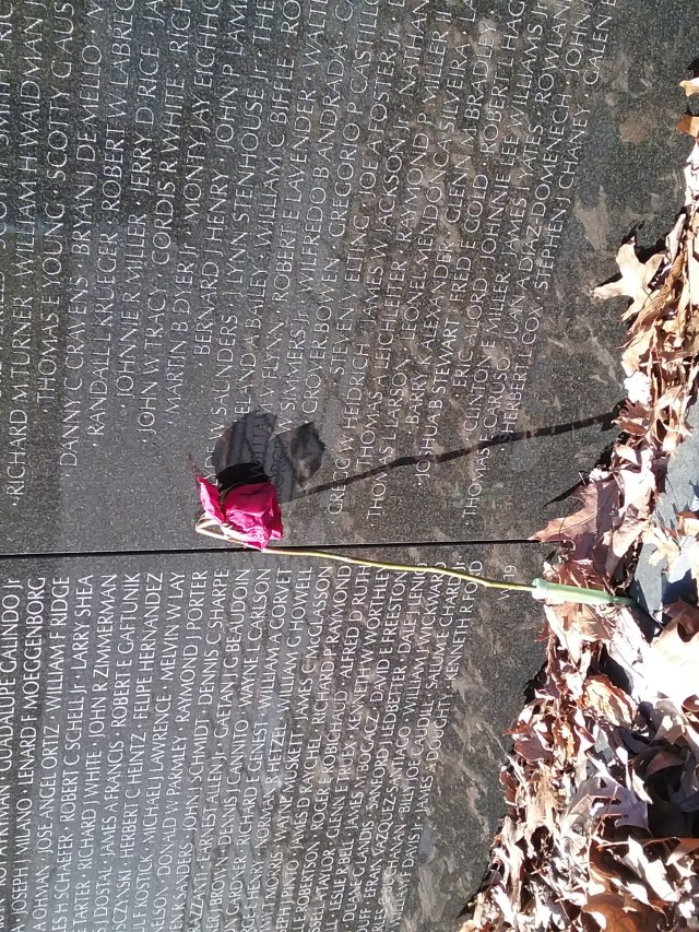 Faded rose and dry leaves by Vietnam Wall, 2019.