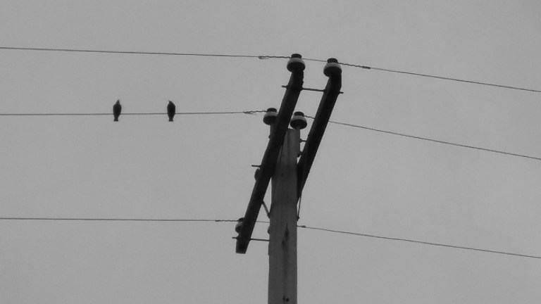 Two birds on a wire attached to telephone pole, by Mary Warner, 2017.