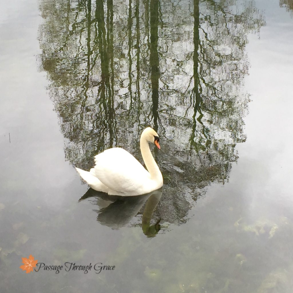imperfectly perfect reflection