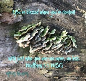 Sabbath Offerings ~ Contentment