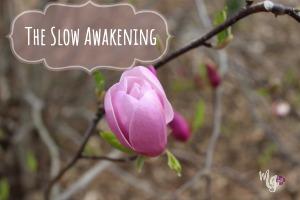The Slow Awakening