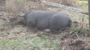 glad the garden is so comfy, pig. Sleep well!
