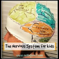 Studying the Nervous System with Kids
