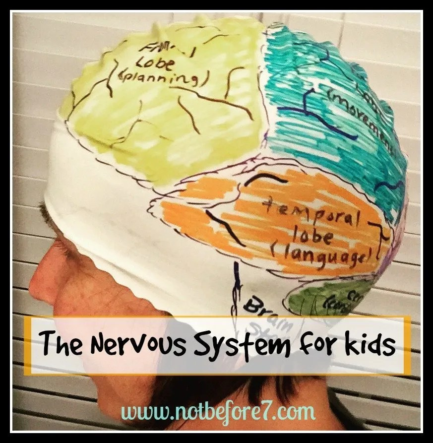 Join us for fun ideas and activities as we learn about the Nervous System in our homeschool.