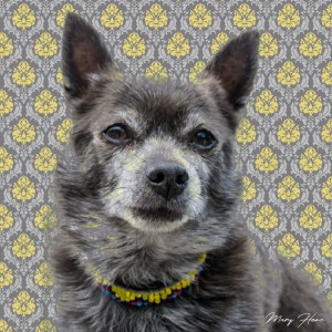 custom pet portrait, fine art photography
