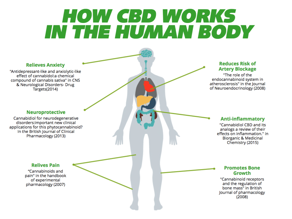 how cbd works in the body