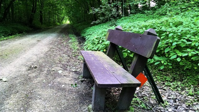 One of many benches along the trail. Unfortunately, they are usually placed where mosquitoes love to gather.