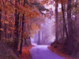 Road_AutumnTrees_Mist
