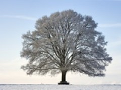 frank-lukasseck-snow-covered-oak-tree