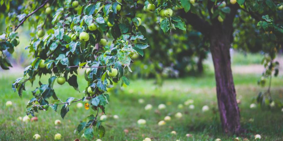 How I paired down my life by determining what good fruit to drop
