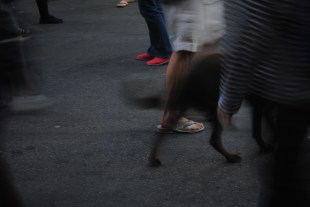 Crowds--including dogs--swallow up 6th Street in downtown Austin on Saturday night.