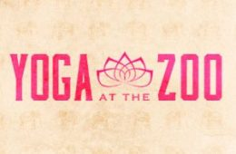 yoga at the zoo