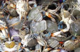 Crab population