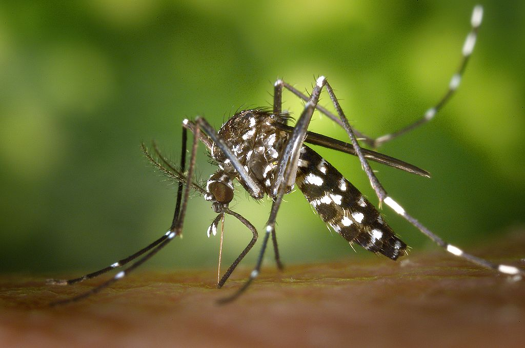 Beware the Mosquitoes: The Number of West Nile Cases in Maryland Has Skyrocketed in 2018
