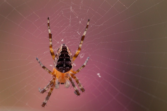 dialogue, tension, garden spider, araneus diadematus, spider