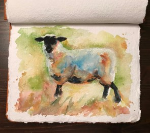 Sheep, watercolor