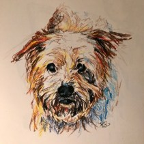 Wally, colored pencil