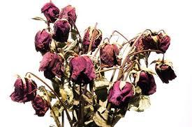 flowerdead