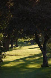 sun on green grass through tunnel of trees