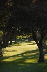 sun on green grass through tunnel of trees