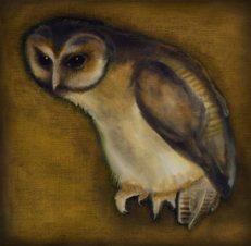 Owl 02