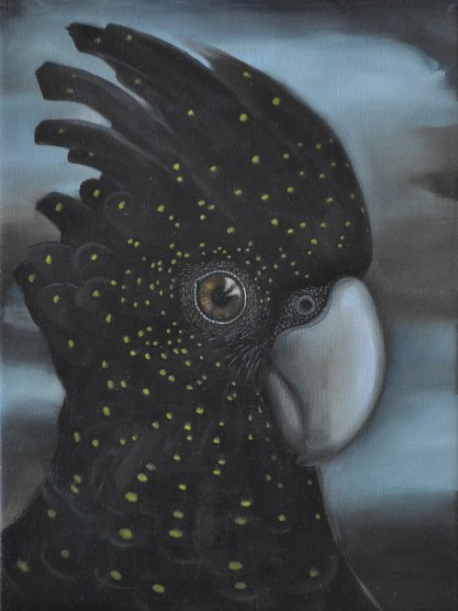 red-tailed-black-cockatoo-01
