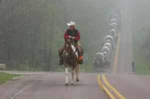 """""""Howdy"""" VanSickle leads the wagon train on its journey through an early morning fog.The 36th annual National Road Festival got off to an early start Friday morning as they left Addison, Somerset County and headed west along Route 40 towards Fayette County."""