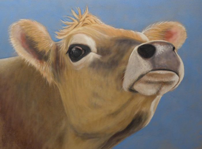 Image result for snobby cow