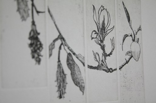 Detail of Magnolia Study IV