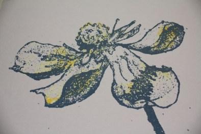 Detail of Ranunculus Veronica