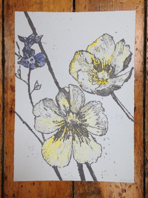 Veronica Ranunculus