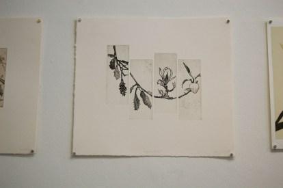 Magnolia Study IV