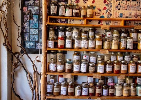 Shelves of spices in mason jars next to a willow plant in corner