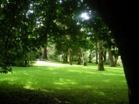 Lysning i skogen