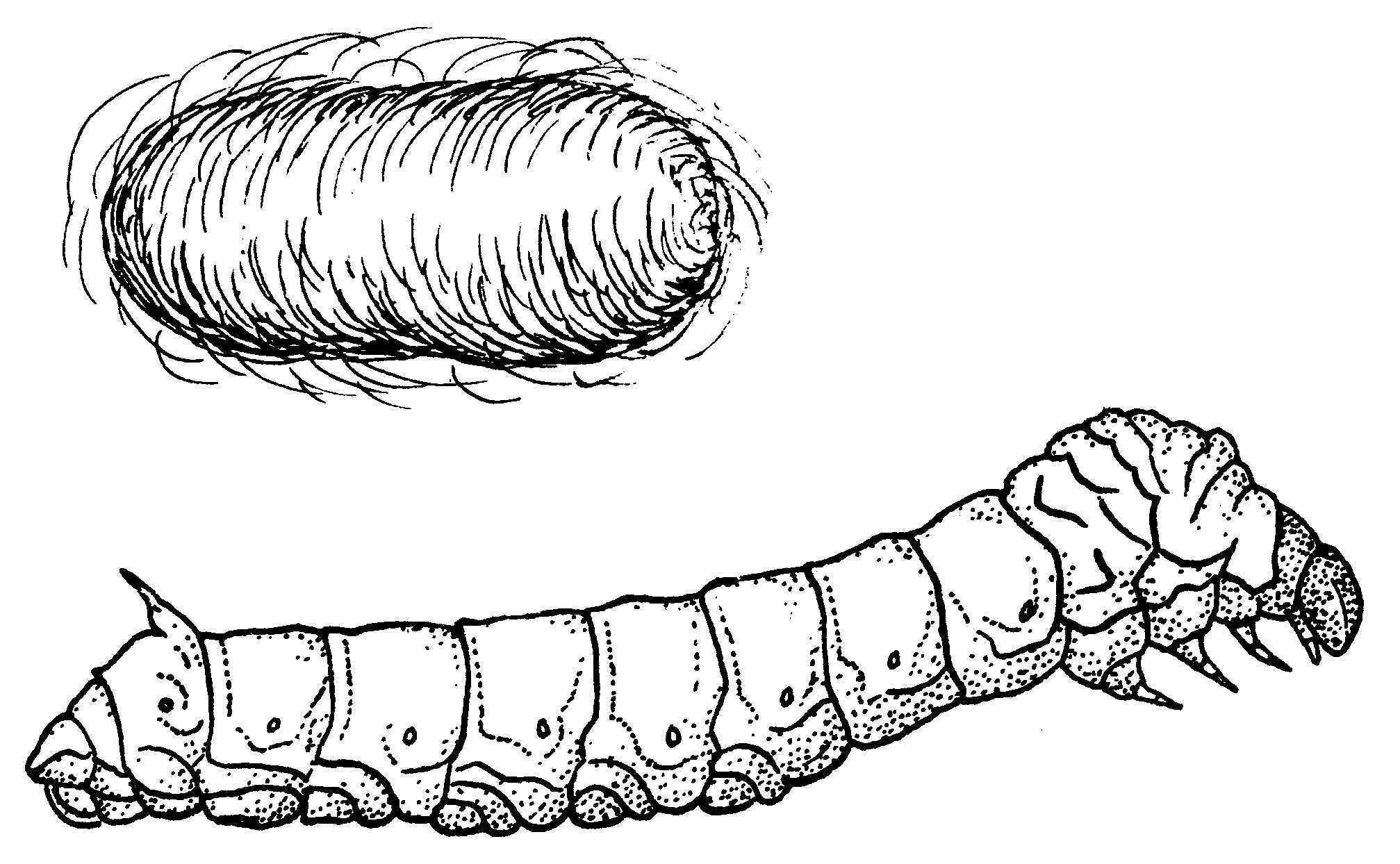 silk worm coloring page coloring pages