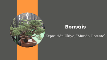 """7. Bonsáis. Exposición Ukiyo, """"Mundo Flotante"""""""