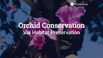 Orchid_Conservation_Via_Habitat_Preservation