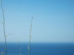 Hinojos con libélula, mar y cielo. En Málaga.